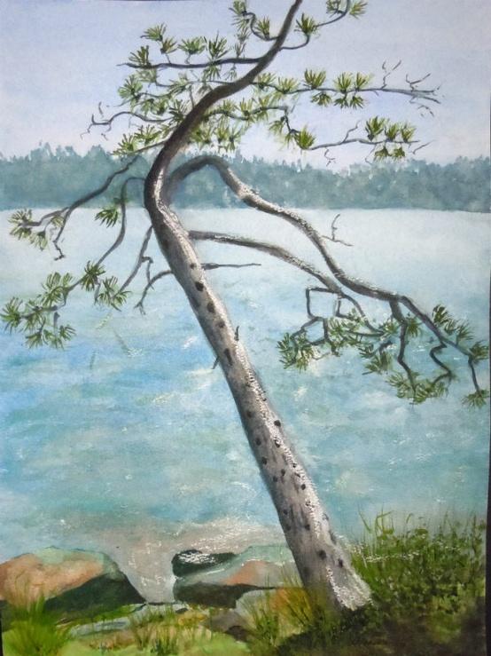 2013-1 Liz's and Joe's Woodpeckered Pine, Lake Muskoka, Watercolour,11x15in Copyright Wendie Donabie
