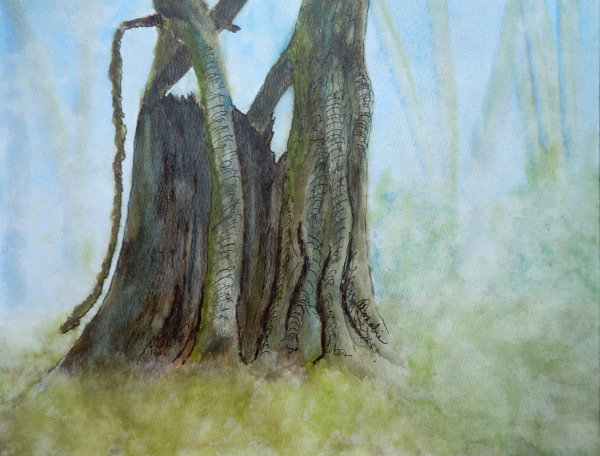 3599 - Firmly Rooted Series - Guardian of the Forest, Watercolour & Ink, Copyright Wendie Donabie
