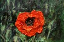 2013-38  A Singular Poppy