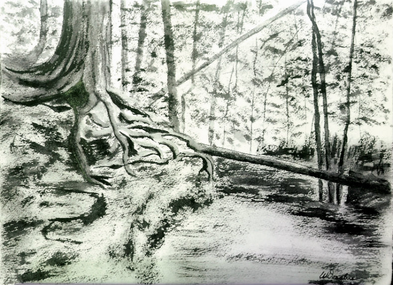 3647 - Firmly Rooted - Watchman, Chinese Ink on watercolour Paper,11 x 15 inches, Copyright Wendie Donabie