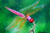 2014-20 Dragonfly #3