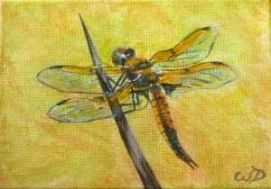3688 - Dragonfly #1, Acrylic on Canvas, 5 x 7 inches, Copyright Wendie Donabie