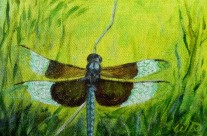 5 More Magical Dragonflies