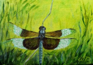 3691 - Dragonfly #6, Acrylic on Canvas, 5 x 7 inches, Copyright Wendie Donabie