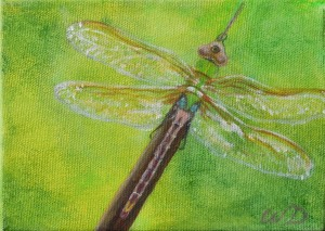 3692 - Dragonfly #7, Acrylic on Canvas, 5 x 7 inches, Copyright Wendie Donabie