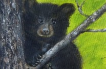 3706, 07, 08, 09 – Five Black Bears in Muskoka