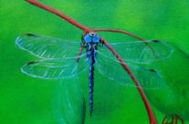 3728 Dragonfly #10 –  Variable Darner