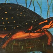 3767 – Spotted Turtle on Paddle