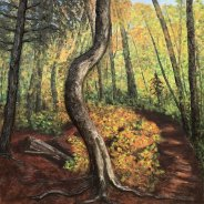 3769 – Hardwood Outlook Trail, Algonquin Park