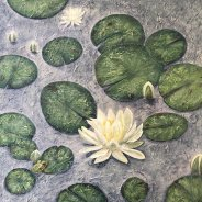 3773 – Meditation – Waterlilies on Cache Lake, Algonquin Park
