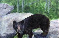 3723 – Bear Rocks