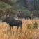 Moose Marsh